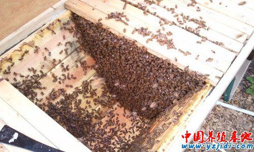 生产和饲养笼蜂的条件