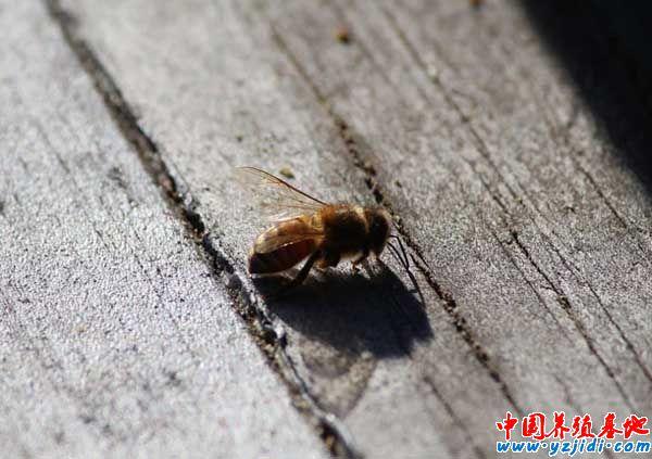 蜜蜂养殖场的保洁和消毒技术