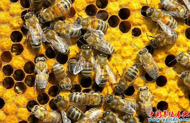 被蜜蜂蛰了怎么处理