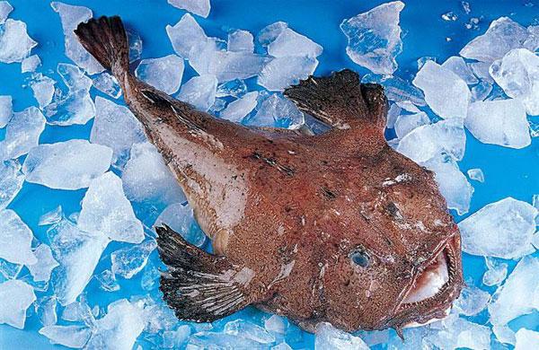 安康鱼多少钱一斤?