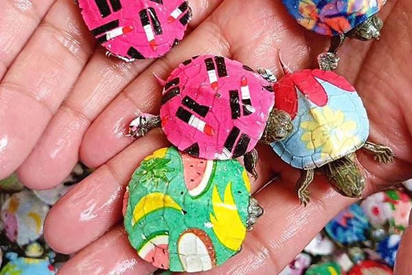 炫彩小乌龟怎么染色?