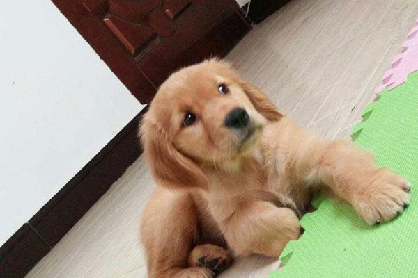 小狗细小病毒怎么治疗及症状分析