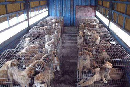肉狗常见传染病的防治