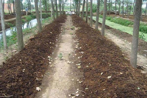 夏季高温蚯蚓养殖技术,高温蚯蚓养殖注意事项