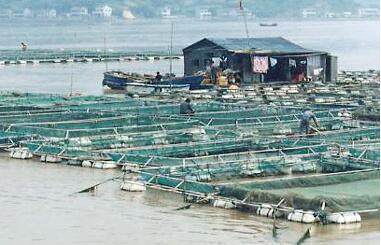投喂饲料单一导致梭子蟹海水小白虾营养不足的处理方法