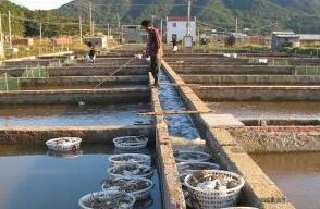 笼养梭子蟹技术