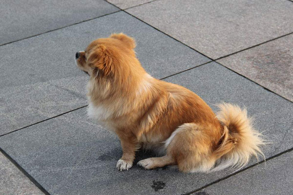 狗怕什么气味?狗闻到什么气味会远离?