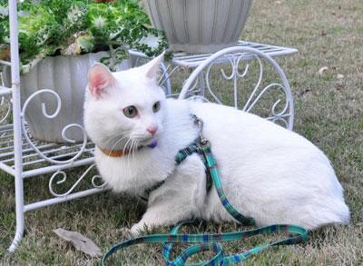 怎么训练才能让猫咪非常听话