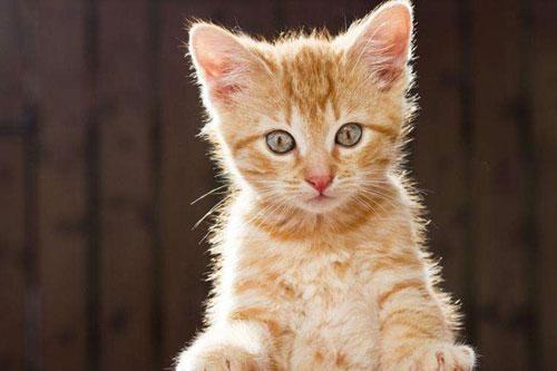 新手养猫注意事项有哪些?
