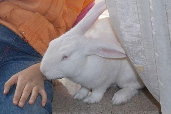 兔子养多久才会认主人?