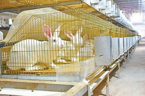 兔场消毒用什么药?兔子养殖用什么消毒?