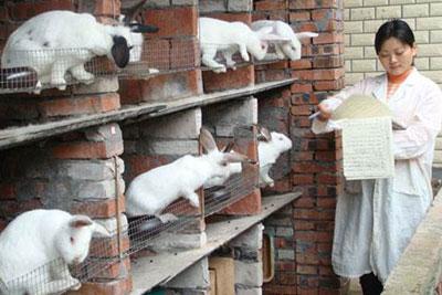 兔场消毒的注意事项,兔场消毒用什么药?