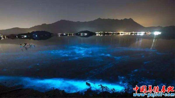 虾塘有夜光藻如何消除,怎样处理虾塘的夜光藻?