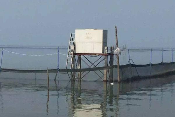 鱼塘投饵区溶氧量太低的危害